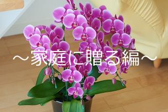 喜ばれる洋蘭の贈り方〜家庭に贈る編〜