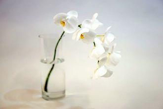 しおれた蘭を復活させる方法 〜湯上げ〜