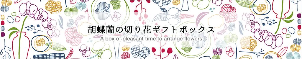 胡蝶蘭の切り花ギフトボックス