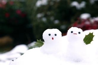 大切な冬越しの方法